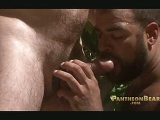 bearded gay bears share single massive meat rod
